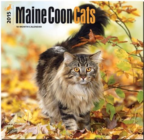 Pdf Maine Coon Cats 2017 Square by Maine Coon Cats 2015 Square 12x12 Multilingual Edition