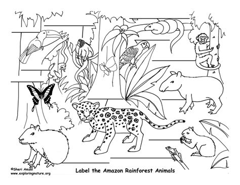 Easy Rainforest Coloring Pages by Tropical Rainforest Easy Coloring Pages