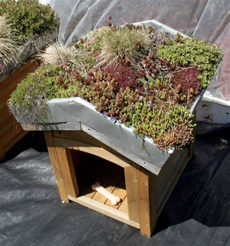 roof dog house eco chic pet houses offer creature comforts green roof dog cat bird houses