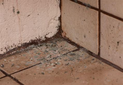what kills bathroom mold how to kill mold bob vila