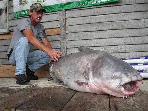 Missouri Records Update St Louis Area Angler Catches 130 Pound Blue Catfish Breaks State And World