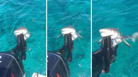 shark bites boat cute smiling lemon shark bites boat s motor youtube