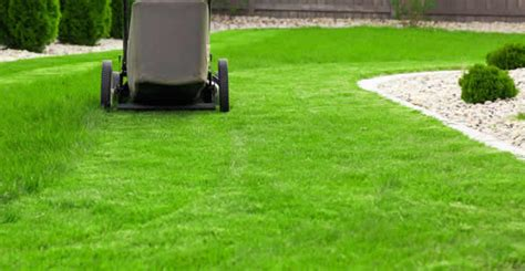 lawn care stockton ca chop chop landscaping