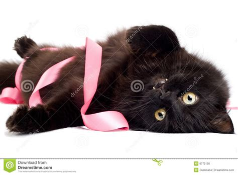 Cat Black Pink black cat with pink ribbon stock photo image