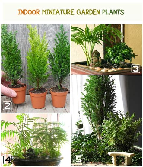 indoor flower garden best plants for miniature gardens resource guide
