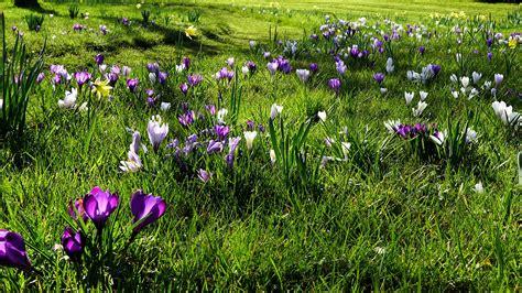 Garten Pflanzen Frühling by Die 70 Besten Hintergrundbilder Fr 252 Hling