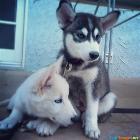 puppy pals names puppy pals dogs cuteimages net