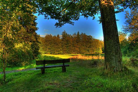 Bilder Deutschland Hessen Schotten Hdr Natur Baumstamm