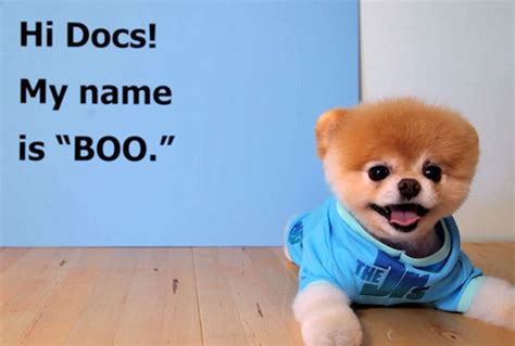 pomeranian diet to lose weight 17 best images about boo the on cutest dogs teacup pomeranian and