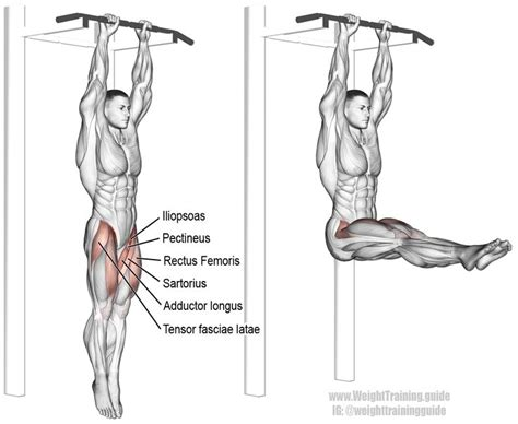 hanging leg raise an isolation and pull exercise visit site to learn why this