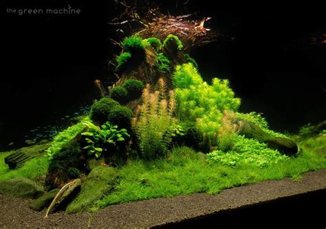 Pinset Aquascape 40 best project fish tank images on fish tanks aquarium ideas and fish aquariums