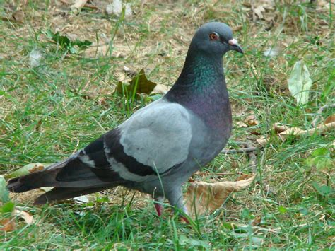 bob and sally s back yard photos of birds seen in dogtown