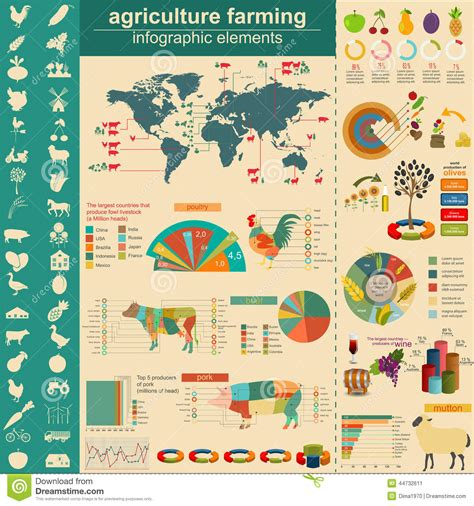 Agriculture, Animal Husbandry Infographics, Vector