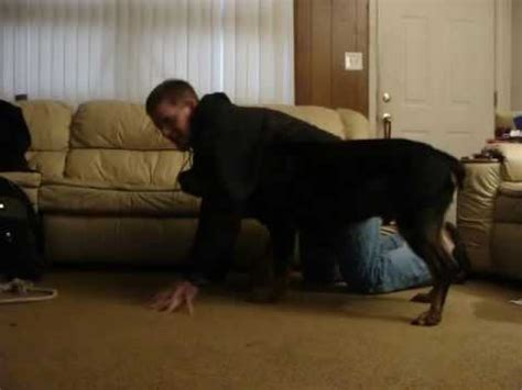 rottweiler attacks statistics rottweiler attacks owner while clipping nails