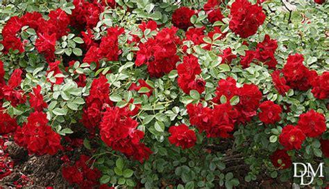 giardini di fiori ponte 2 giugno cosa vedere tra giardini mostre