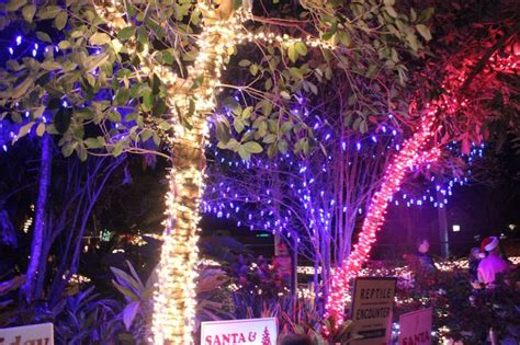 26 best images about holiday lights spectacular on