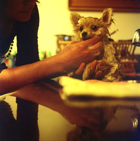 how often should a yorkie be bathed should you bathe your small often