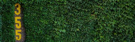 wrigley field ivy wallpaper wallpapersafari