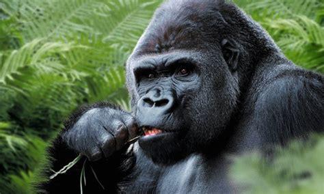 bristol zoo gardens offers breakfast meetings