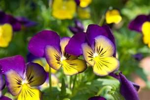 pretty pictures jeffrey friedl s 187 pretty flowers