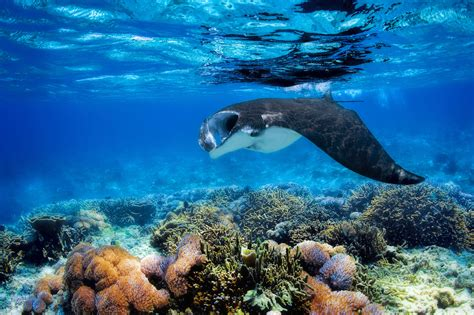 best scuba diving websites the 8 best scuba diving in south america the