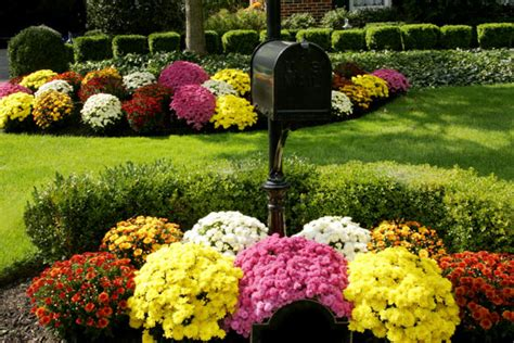 top fall flowers for your garden perennials plants and decorate your mailbox for fall garden club