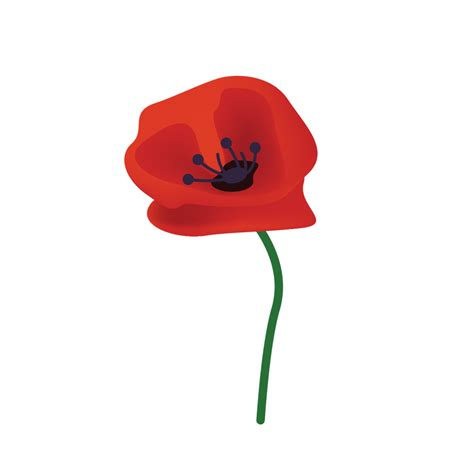 small picture small poppy rsa
