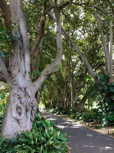 Botanical Gardens Restaurant Adelaide Botanic Gardens Restaurant Adelaide