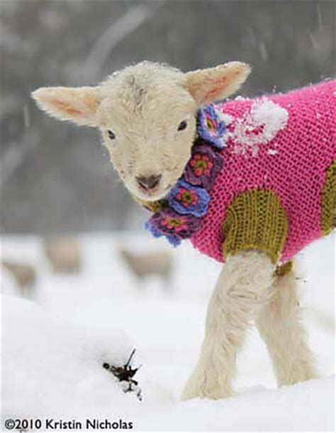 pattern for knitted goat sweater what not to knit crazy pet knitting