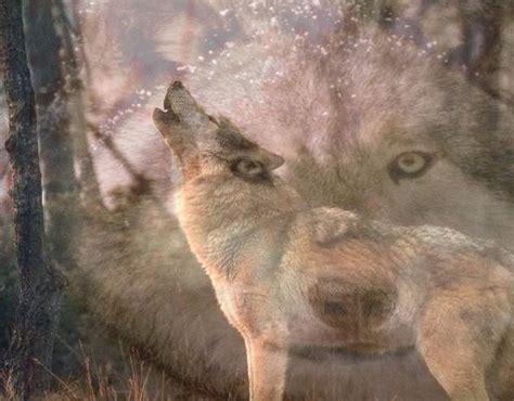 wolf wallpaper pinterest wolf desktop backgrounds screensavers free howling wolf