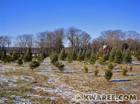 christmas tree from lebanon christmas tree farm