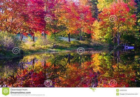 colored trees fall colored trees along river stock photo image 44893258