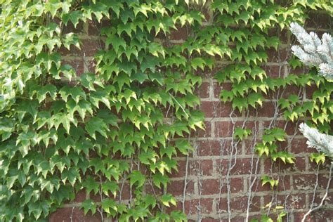 pin wall plant vines flowers nature on pinterest