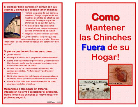 bed bug in spanish dr bed bug free education material on bed bugs cimex
