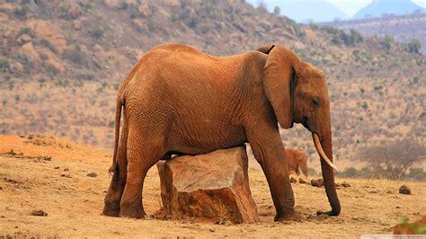imagenes de animales gratis fondos de pantalla animales salvajes wallpapers hd
