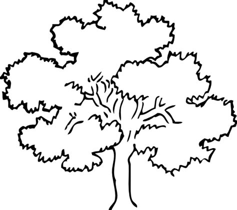 Oak Tree Clip Art At Clker Com Vector Clip Art Online Tree Coloring Page Outline