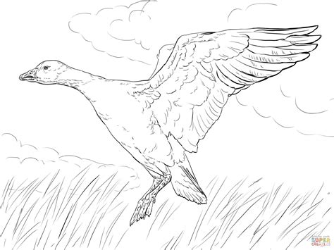 baby goose coloring pages baby goose coloring page coloring home