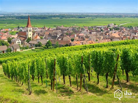 how to an alsatian alsace rentals in a farm for your vacations with iha direct