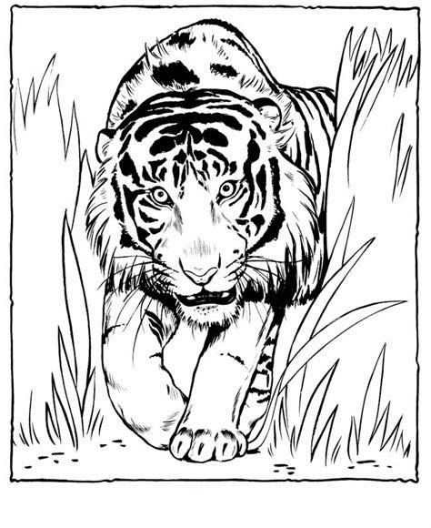advanced tiger coloring pages szop pokoloruj kolorowanki