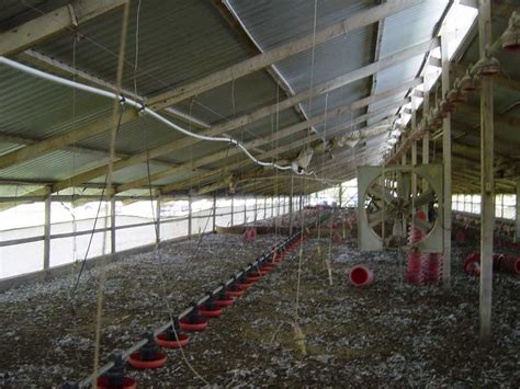poultry house designs poultry house photos chicken coop design ideas