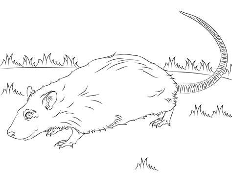 pack rat coloring page imagens de ratos e ratinhos para imprimir e colorir