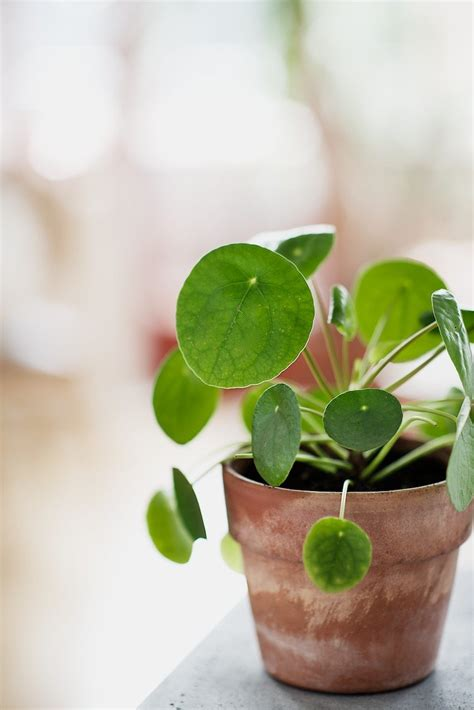 Plante Interieur Facile by Plantes Vertes Int 233 Rieur Faciles 224 Entretenir