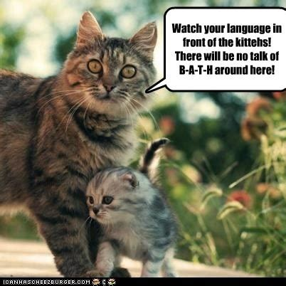 17 best images about lolcats on pinterest cats funny