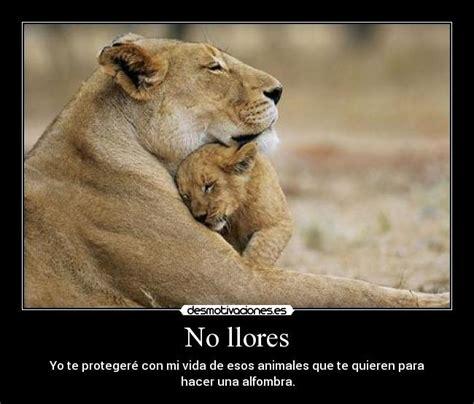 imagenes de leones tristes im 225 genes y carteles de leona pag 2 desmotivaciones