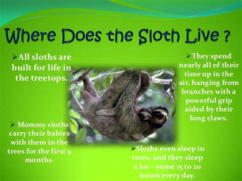 How Do Plants Adapt To The Tropical Rainforest - student powerpoint my rainforest animal presentation 1