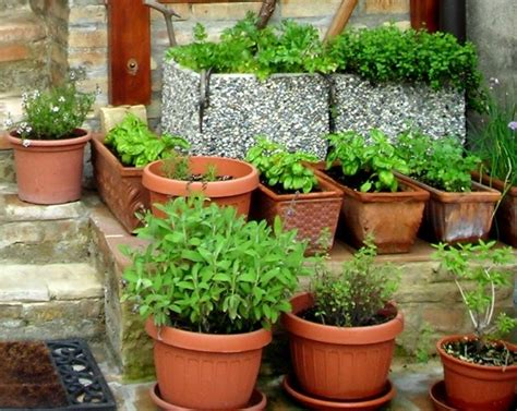 10 tips for growing your own herb garden outdoor living beautiful herb garden photos