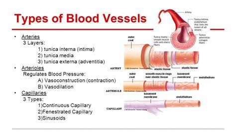 Blood Typr 3 the cardiovascular system ppt