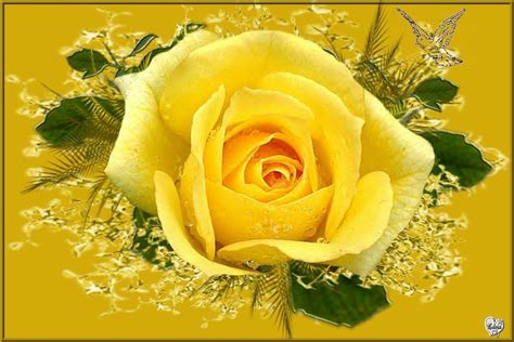 desktop wallpaper yellow roses yellow rose flower wallpapers wallpaper cave