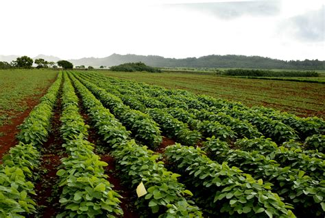 Agricultural Finance From Crops To Land Water And Ebook E Book agriculture applications scalehoundwater water purification and descaling