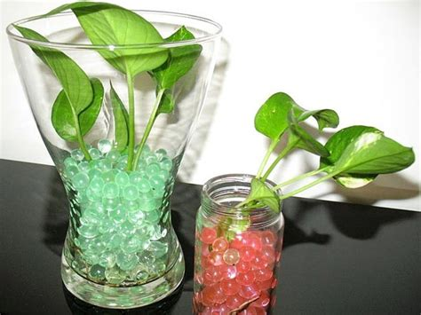 small indoor plants  decorate house  pics